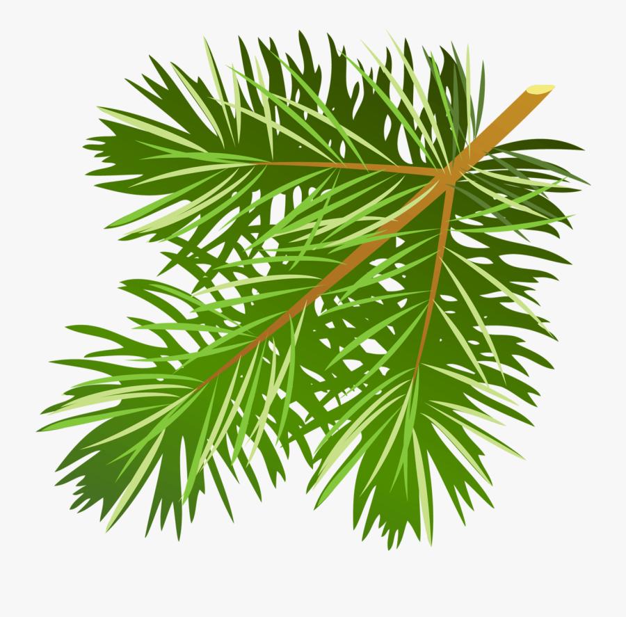 Pine Tree Branch Clipart - Pine Tree Branch Clip Art, Transparent Clipart