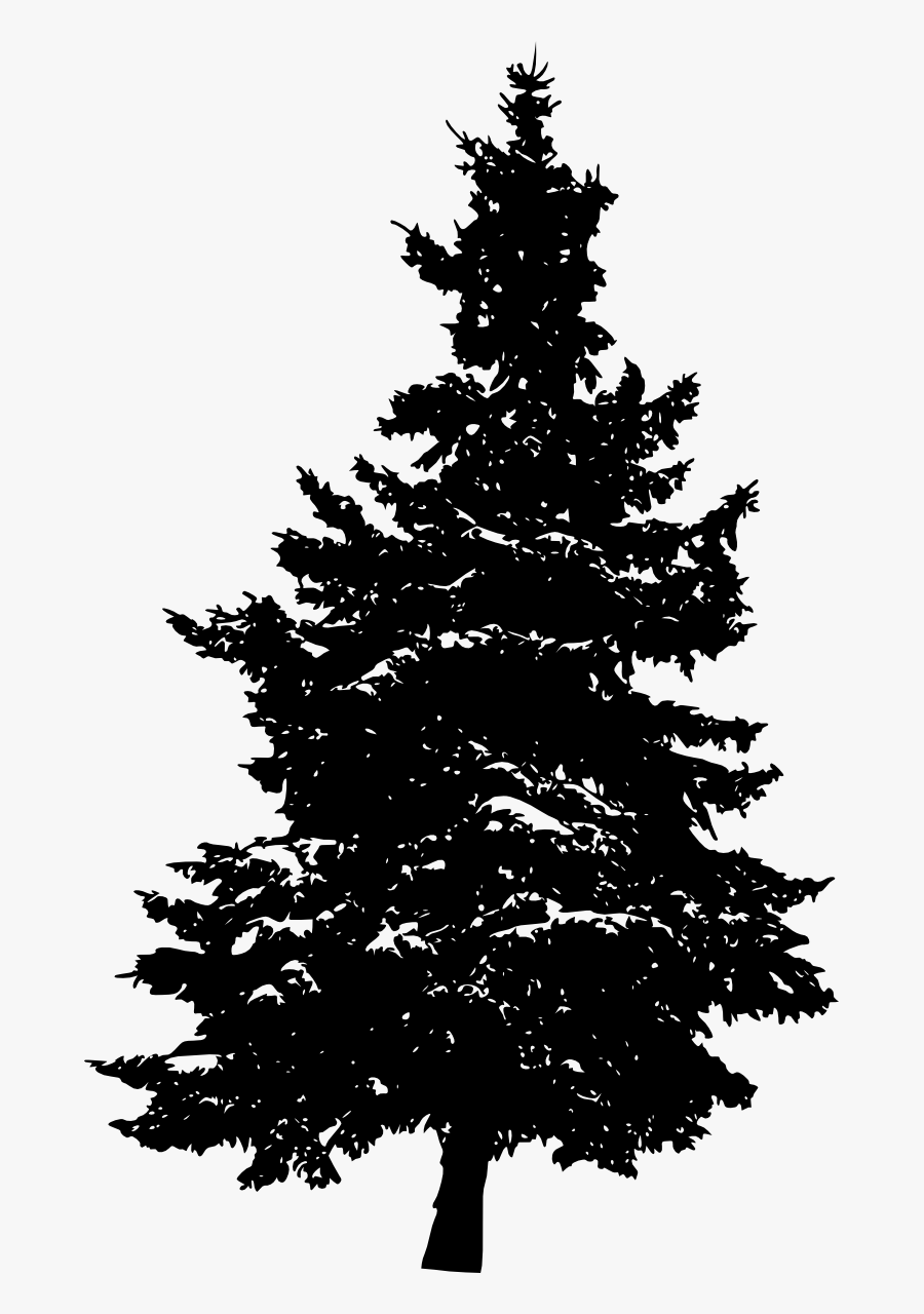 Transparent Pine Trees Clipart Black And White - Pine Trees Transparent Background, Transparent Clipart