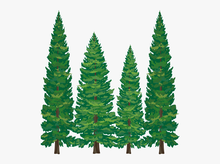Pine Tree Clipart Softwood - Transparent Pine Tree Clipart, Transparent Clipart