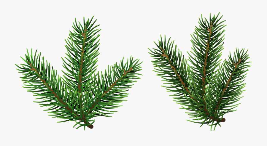 Pine Tree Branches Png Clip Art - Pine Tree Branch Clipart, Transparent Clipart