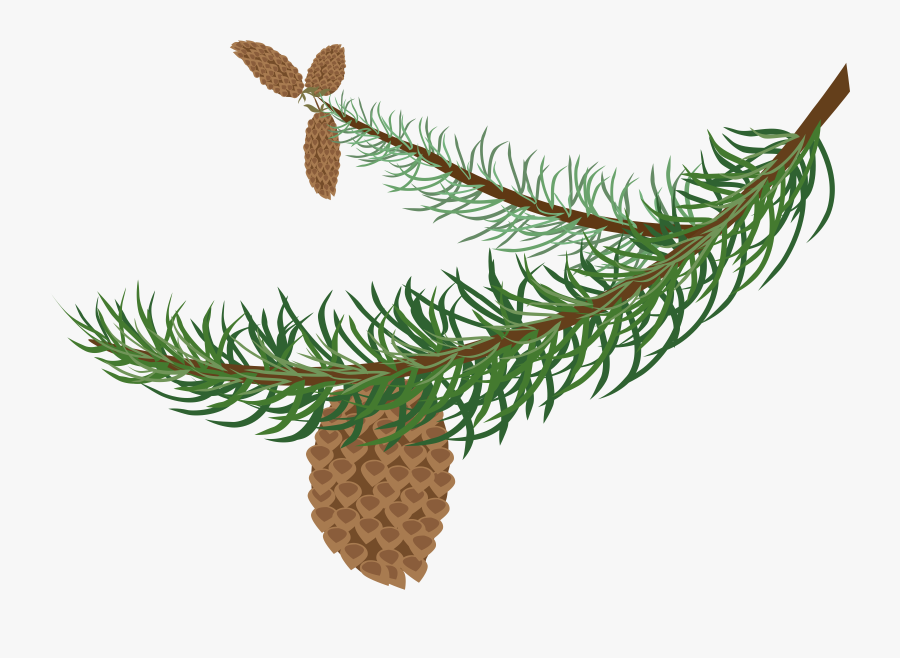 Fir Branch With Cones - Clipart Winter Tree Branch, Transparent Clipart