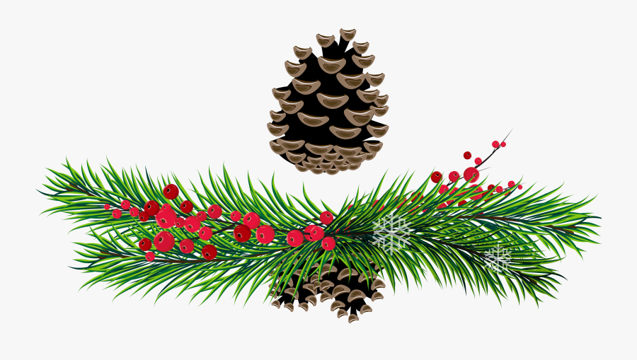 Pine Bough Clipart - Christmas Pine Transparent Background, Transparent Clipart