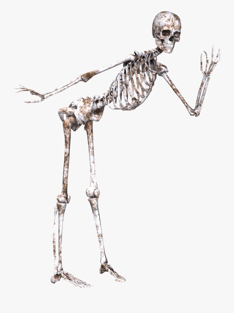 Transparent Running Skeleton Clipart - Skeleton In Pose Transparent, Transparent Clipart