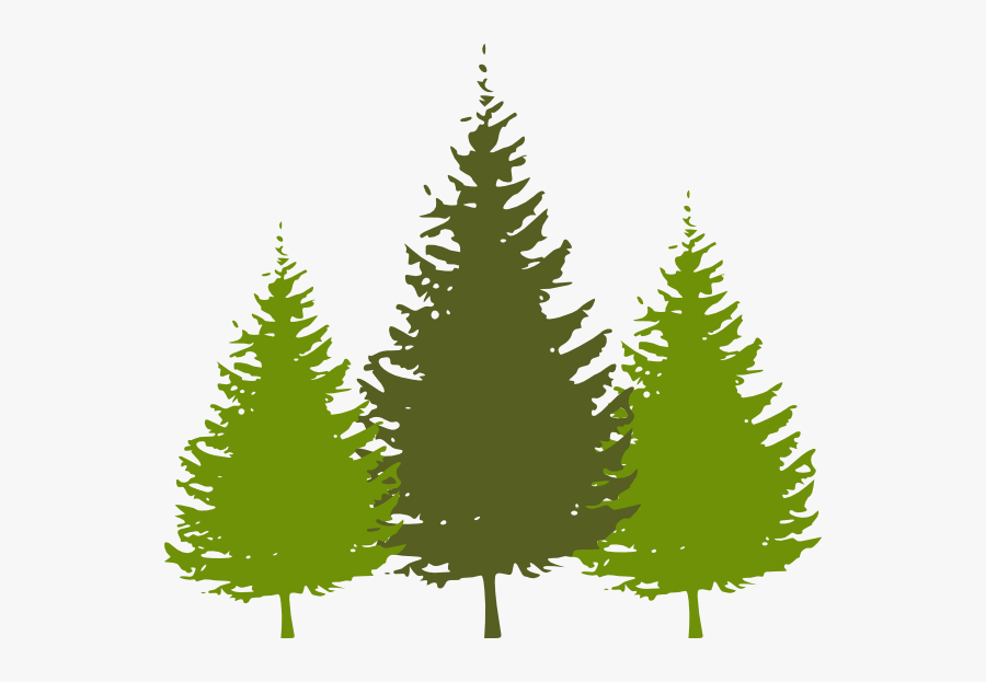 Redwood Tree Clipart - Pine Tree Clipart Free, Transparent Clipart