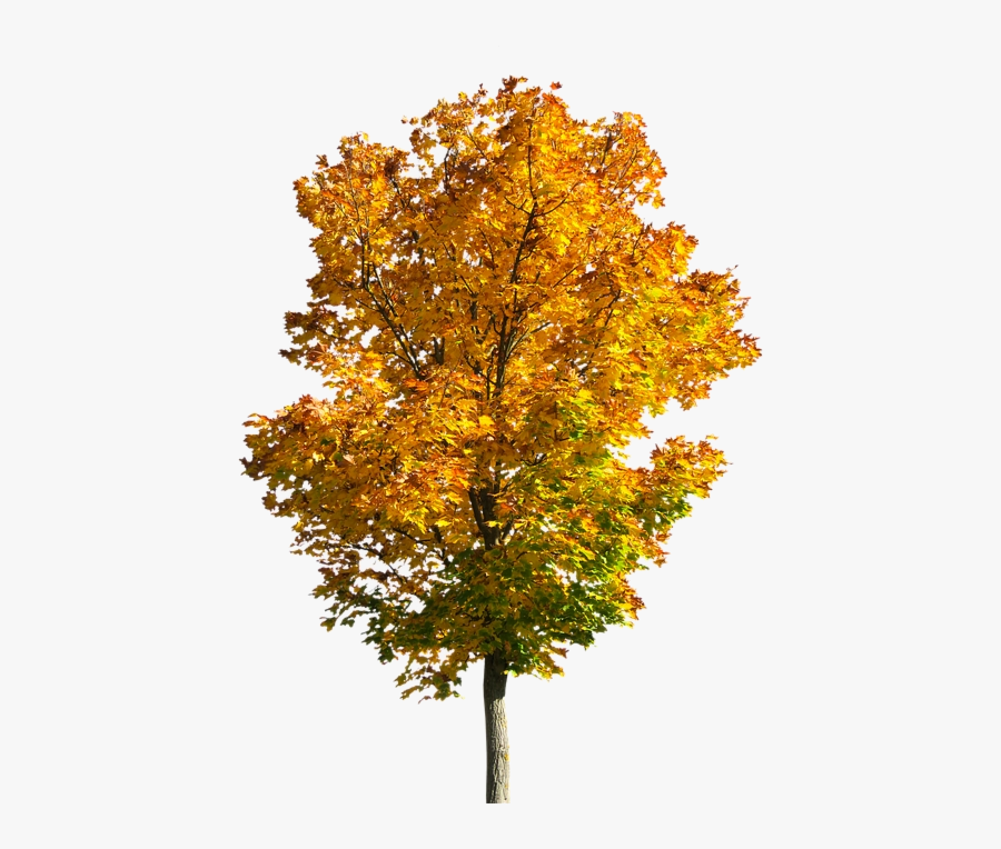Fall Tree Trees Clipart Transparent Png - Transparent Fall Tree Png, Transparent Clipart