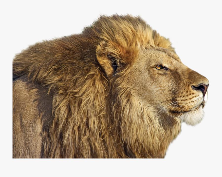 Lion Png Clip Art - Lion Png Transparent, Transparent Clipart
