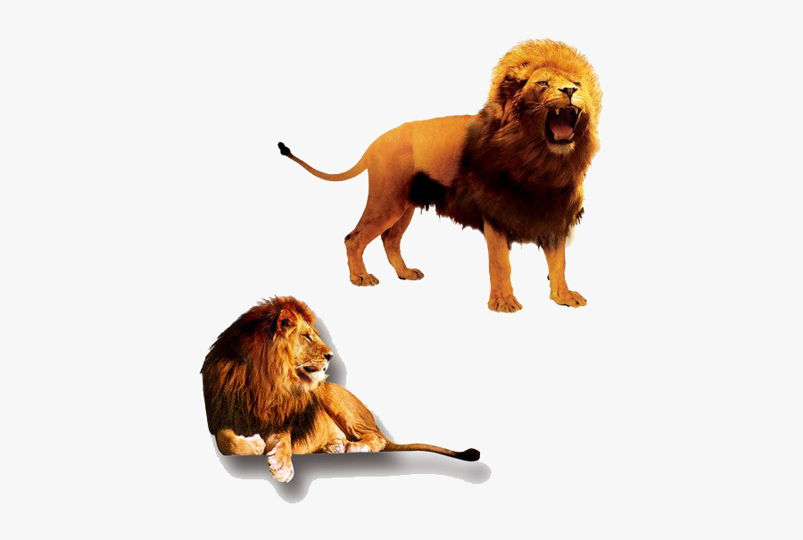 The Lion King Png Clipart - Lion And Lioness, Transparent Clipart