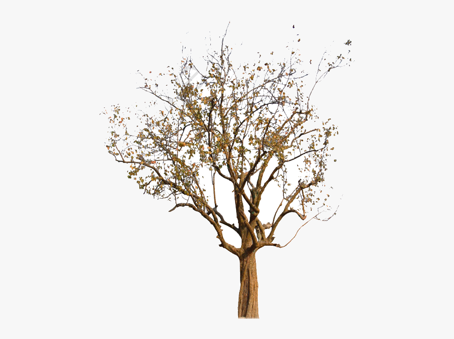 Fall Tree Autumn Clipart Image And For Free Transparent - Real Fall Tree Png, Transparent Clipart
