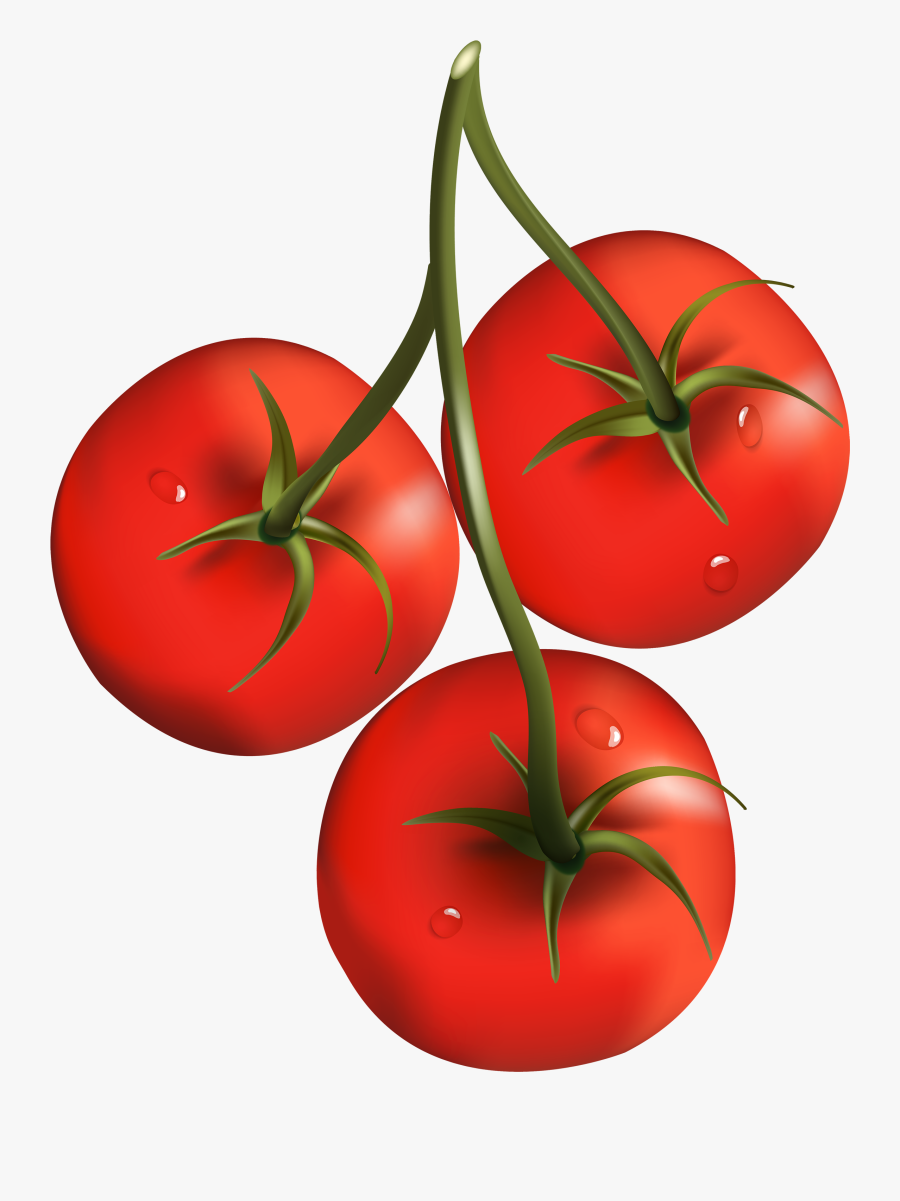 Tomato Branch Png Clipart - Tomatoes Clipart Png, Transparent Clipart