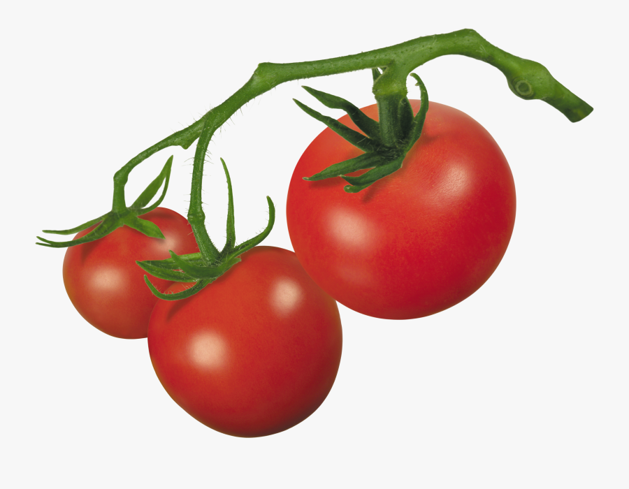 Images For Gt Tomato Clipart - Clipart Tomato, Transparent Clipart