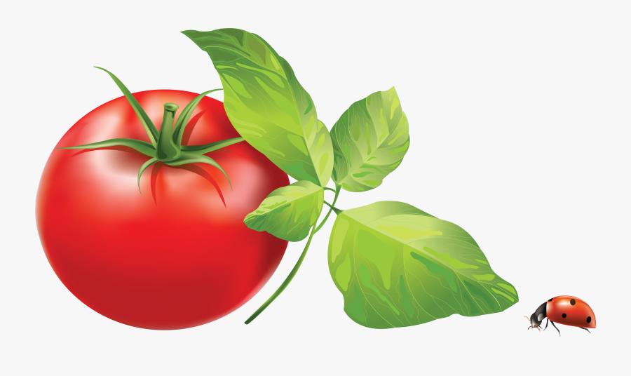 Tomato Clipart - Tomato Leaves Clip Art, Transparent Clipart
