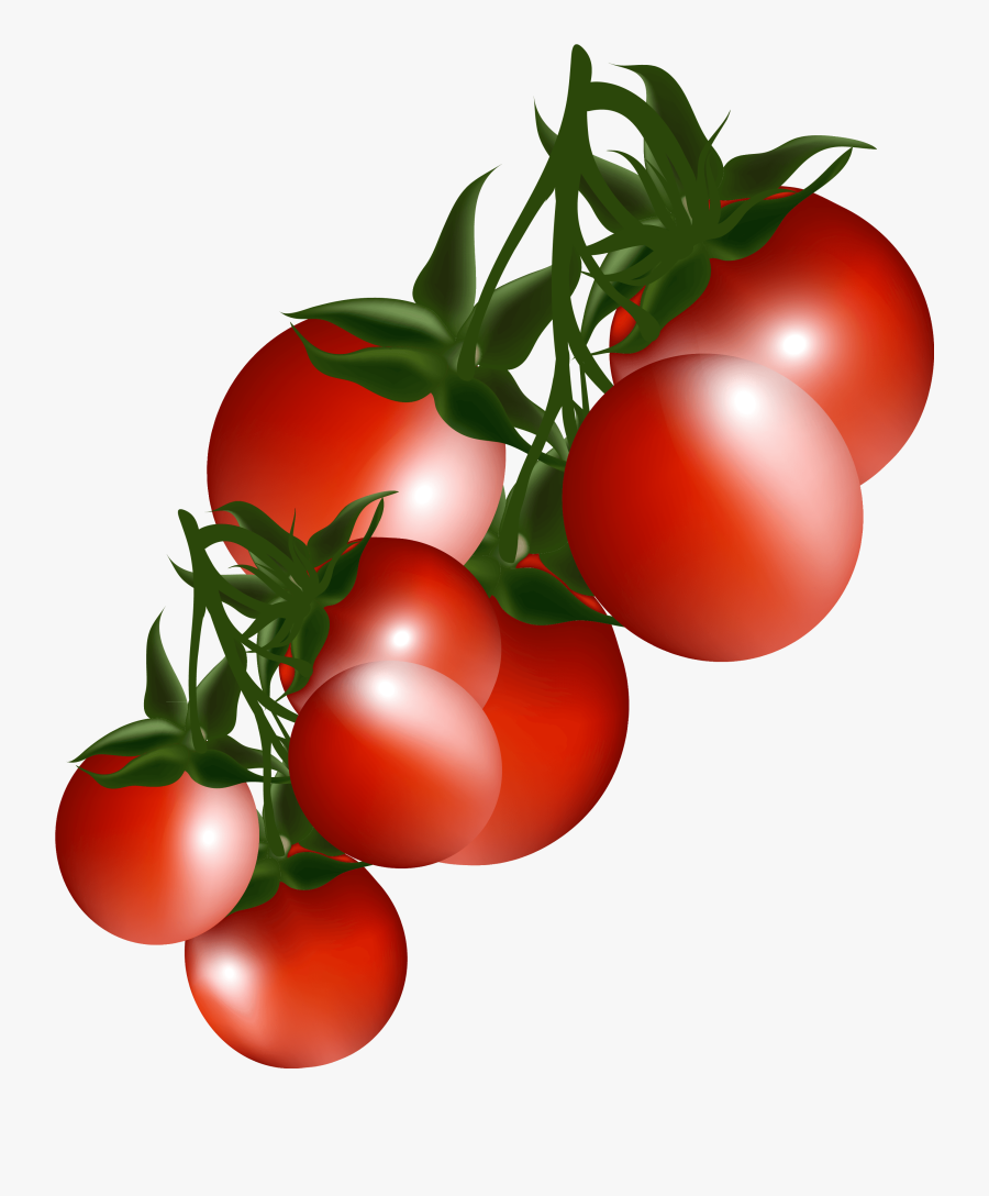 Tomatoes Branch Png Clipart Picture - Cherry Tomatoes Clipart Png, Transparent Clipart