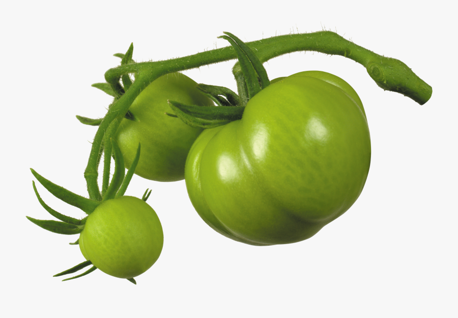Green Tomato Png, Transparent Clipart