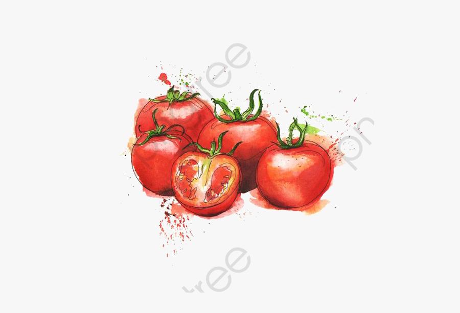 Tomato Clipart Watercolor Illustration - Tomato Clipart Watercolor, Transparent Clipart