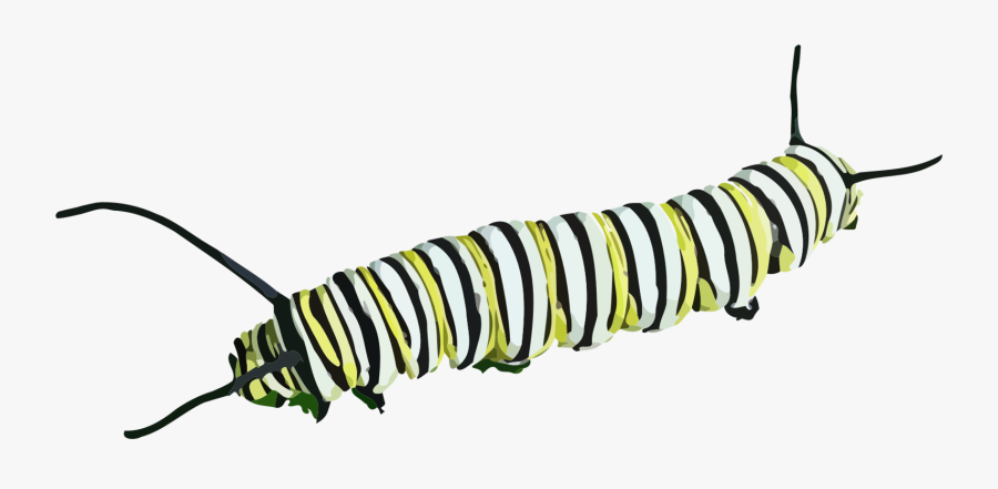 Caterpillar Transparent, Transparent Clipart