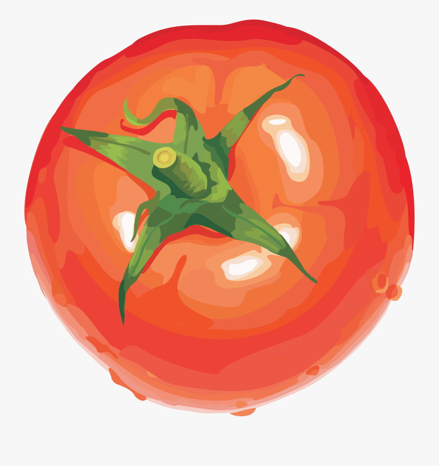 Transparent Tomato Clipart - Tomato Drawing No Background, Transparent Clipart