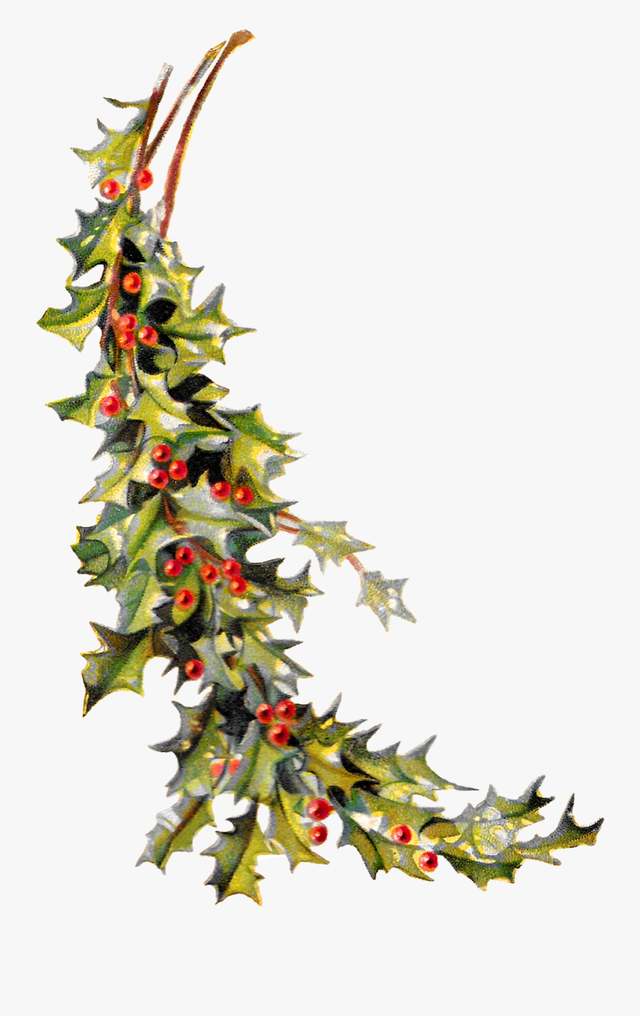 Free Christmas Clipart Holly - Free Vintage Christmas Holly Border Clipart, Transparent Clipart