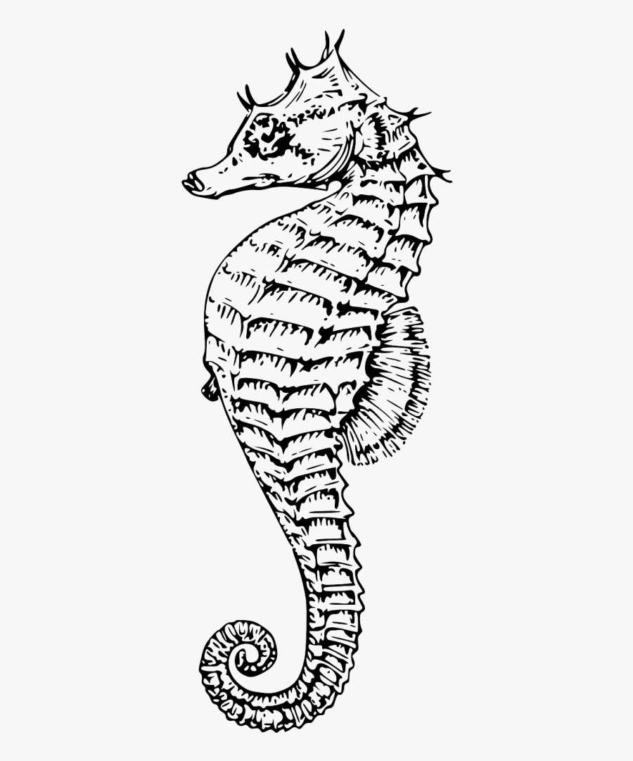 Transparent Seahorse Silhouette Png - Line Drawing Of Sea Horse, Transparent Clipart