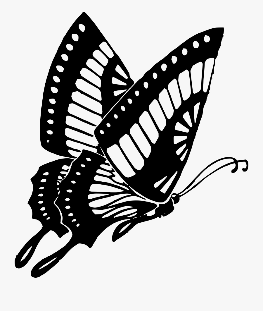 Butterfly Cocoon Drawing At Getdrawings - Butterfly Black And White Png, Transparent Clipart