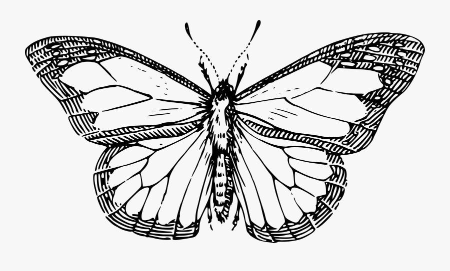 Butterfly Black And White Drawing At Getdrawings - Butterfly Black And White Drawing, Transparent Clipart