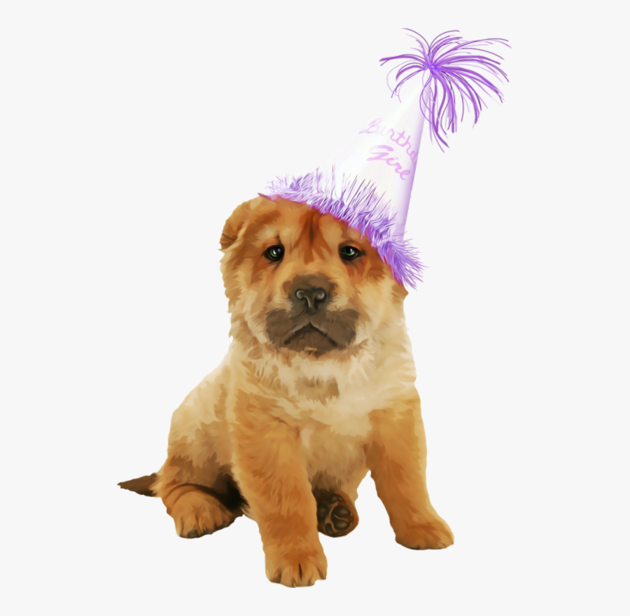 Puppy Wearing A Birthday Hat, Transparent Clipart