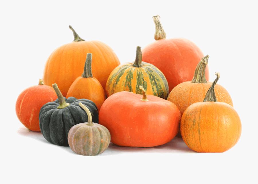 Pumpkin Patch Png - Pumpkin Png, Transparent Clipart