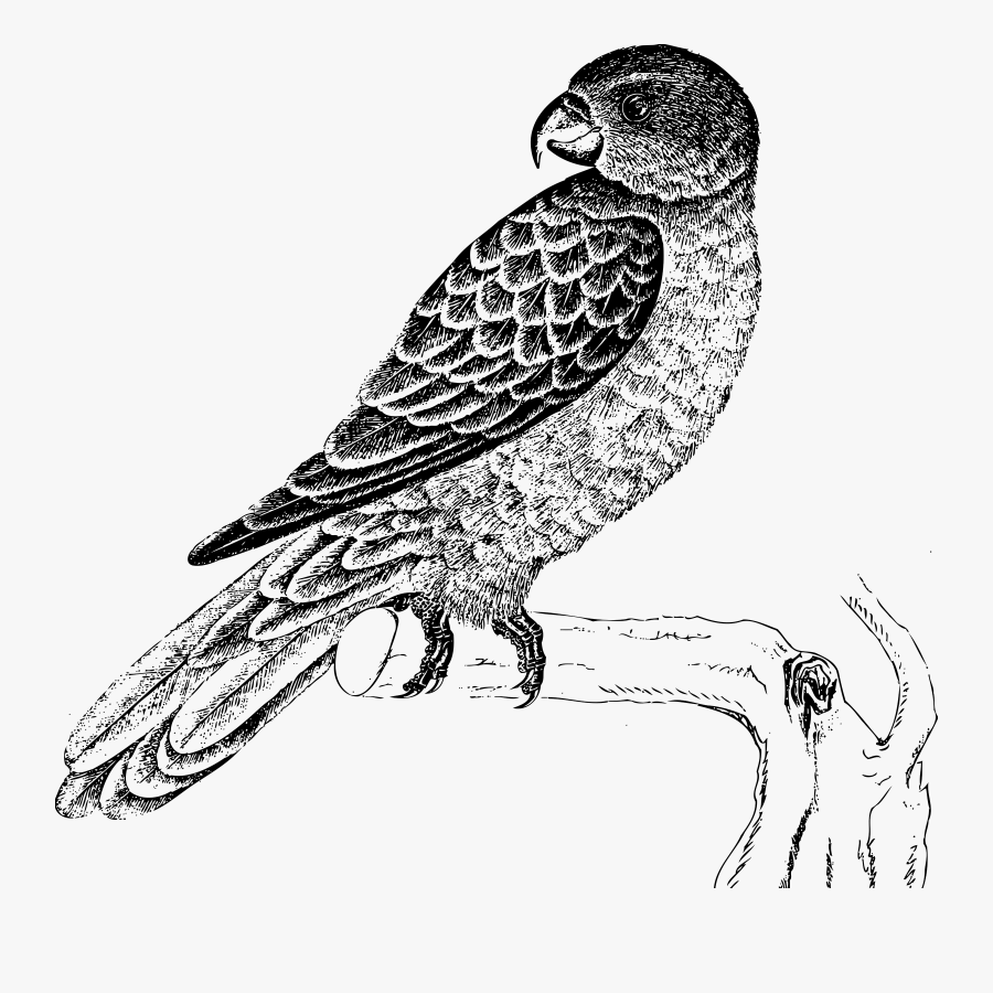 Blue Backed Big Image - Parrot Bird Black And White, Transparent Clipart