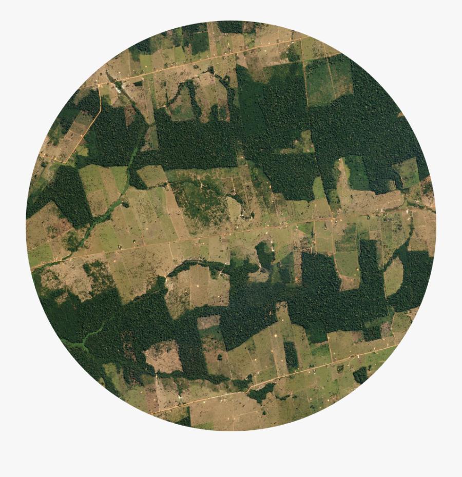 Jungle Clipart Forest Amazon - Fragmentation Habitat Rain Forest, Transparent Clipart