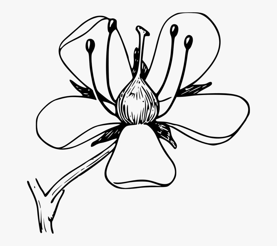 Mayflower Clipart Colorful Flower - Draw An Azalea Flower, Transparent Clipart
