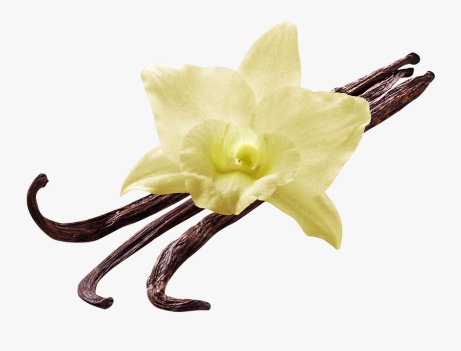 Flower Transparent Png Stickpng - Vanilla Flower Png, Transparent Clipart