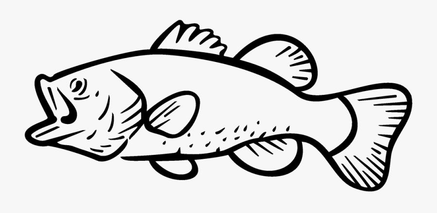 Bass Fishing Largemouth Bass Clip Art Largemouth Bass Drawing