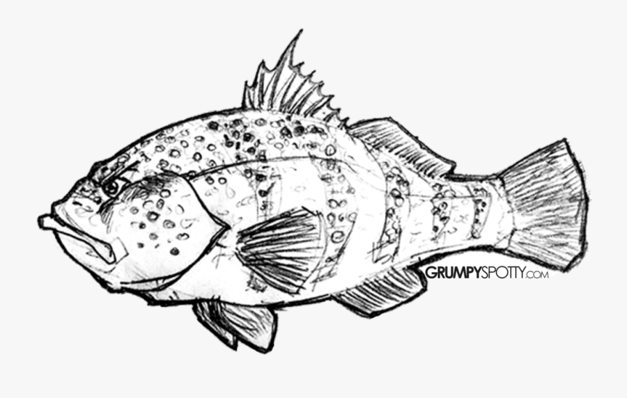 Clip Art Stock Walleye Drawing Easy - Rock Cod, Transparent Clipart