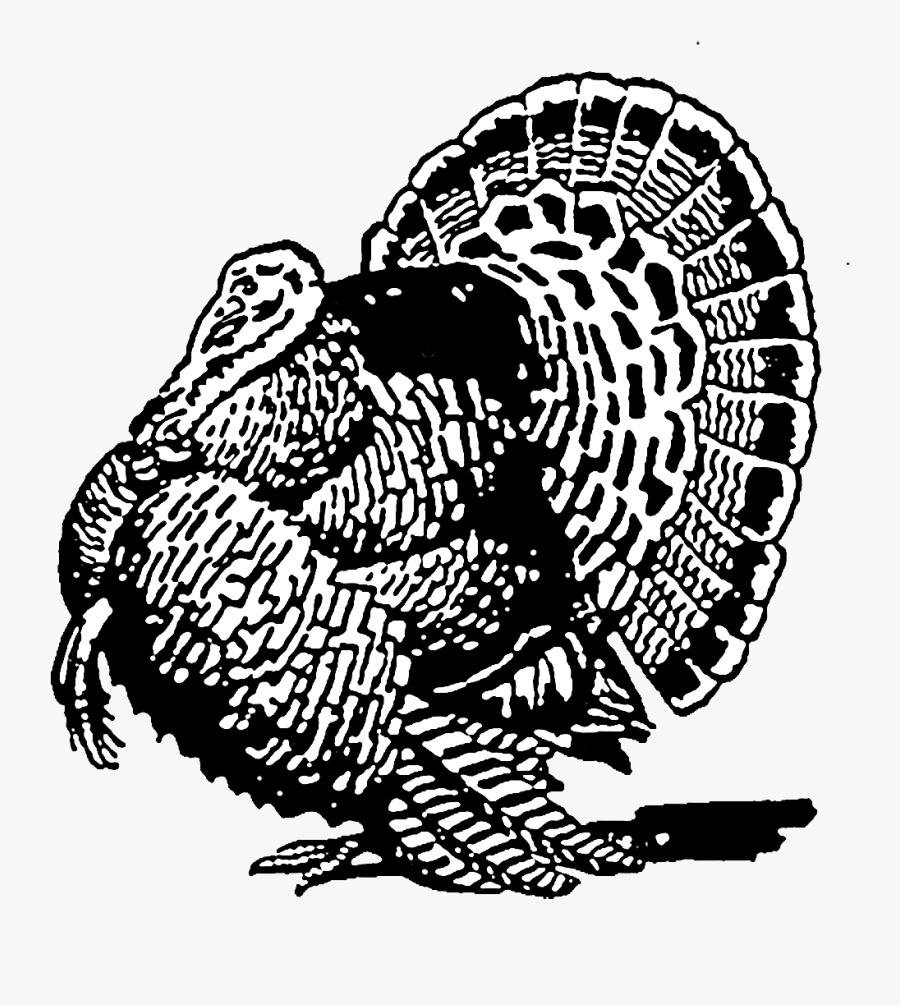 Wild Turkey Clipart Black And White, Transparent Clipart