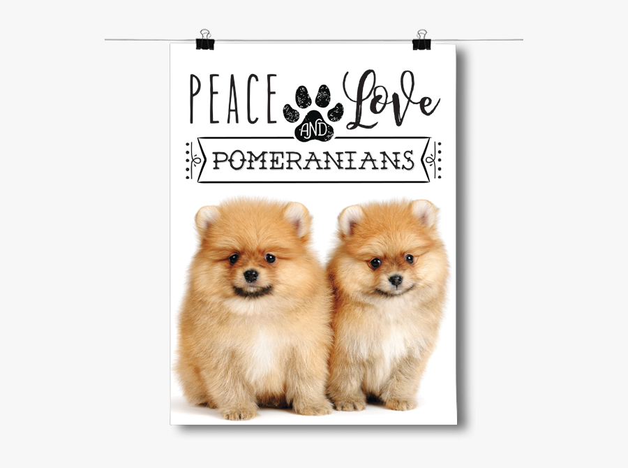 Peace Love And Pomeranians - Dog Is Right For Me, Transparent Clipart