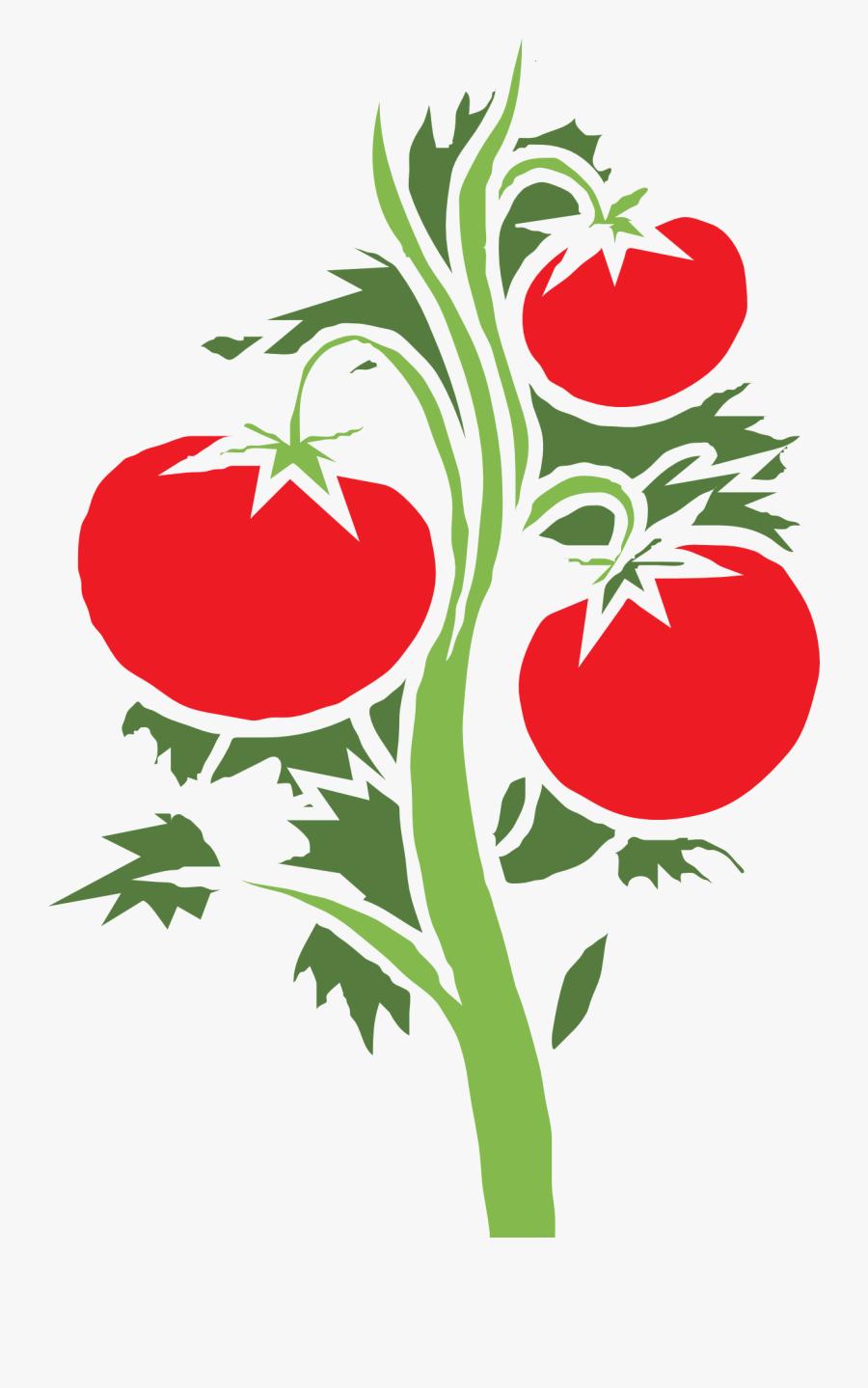 Cherry Tomato Clip Art - Tomato Plant Clipart Png, Transparent Clipart