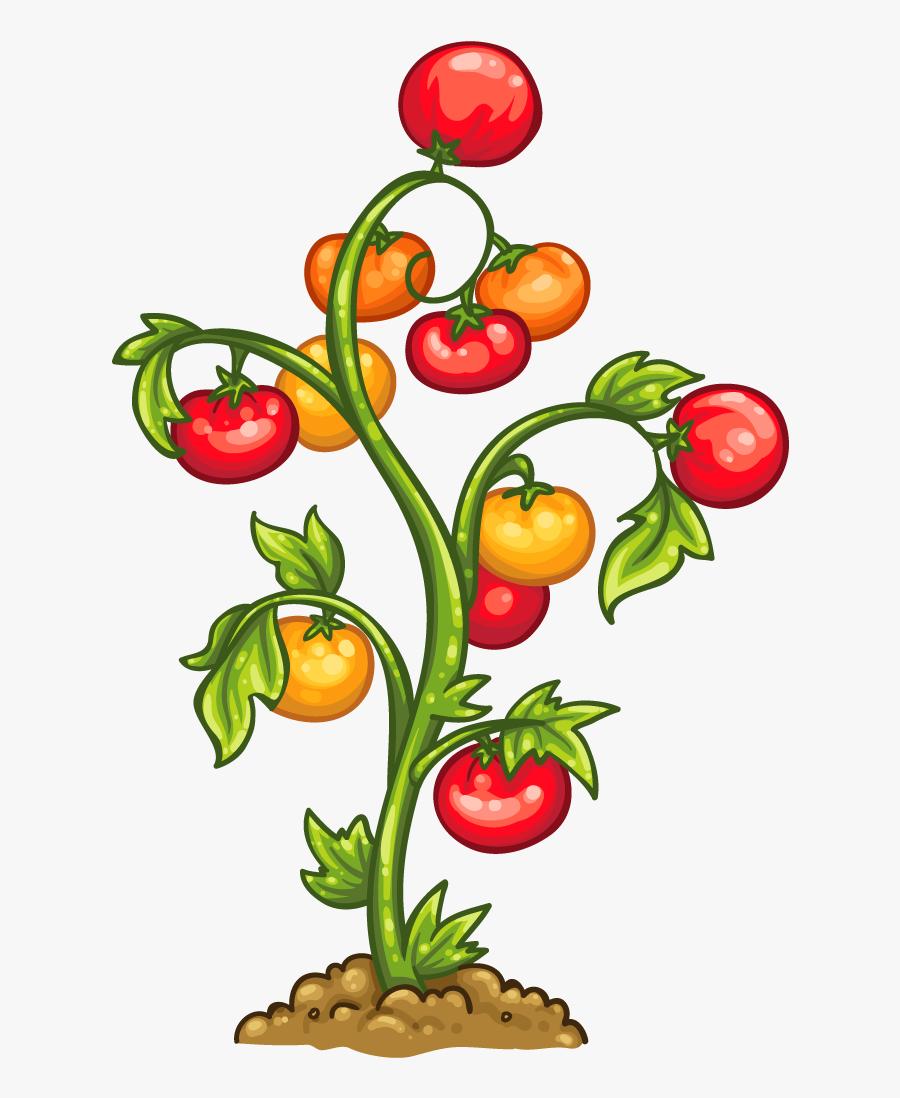 Transparent Tomato Vine Png, Transparent Clipart