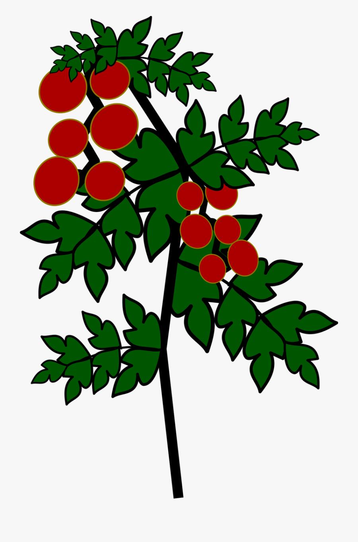 Transparent Tomato Plant Png - Gambar Kartun Pohon Tomat, Transparent Clipart