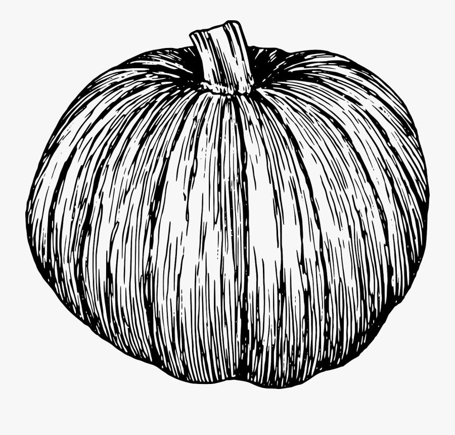 Transparent Vine Vector Png - Black And White Pumpkin Illustration, Transparent Clipart