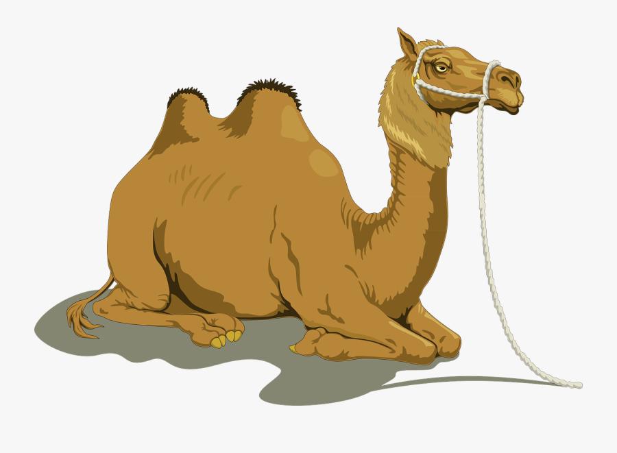 Camel - Sitting Camel Clipart, Transparent Clipart