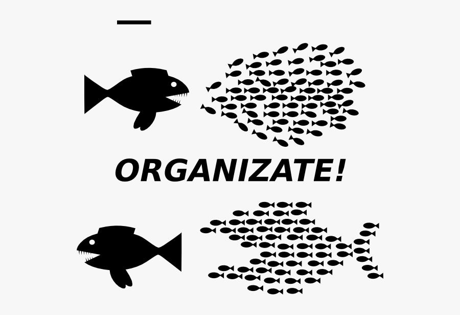 Organizing Fish, Transparent Clipart