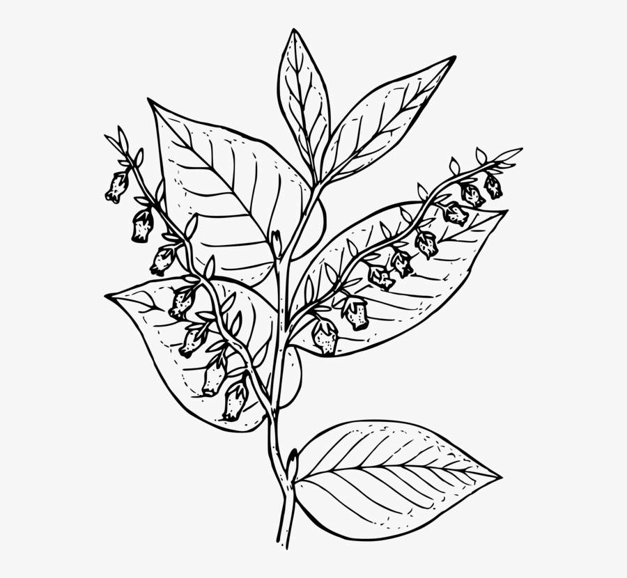 Coloring Book Colouring Pages - Draw Salal, Transparent Clipart
