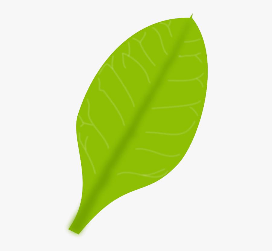 Green Leaf - Single Green Leaf Png, Transparent Clipart