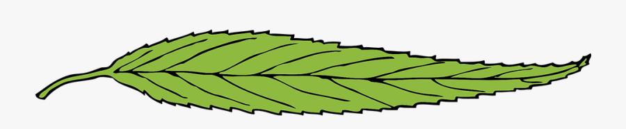 Green, Leaf, Fallen Leaf, Single, Thin, Flattened - Thin Leaf, Transparent Clipart