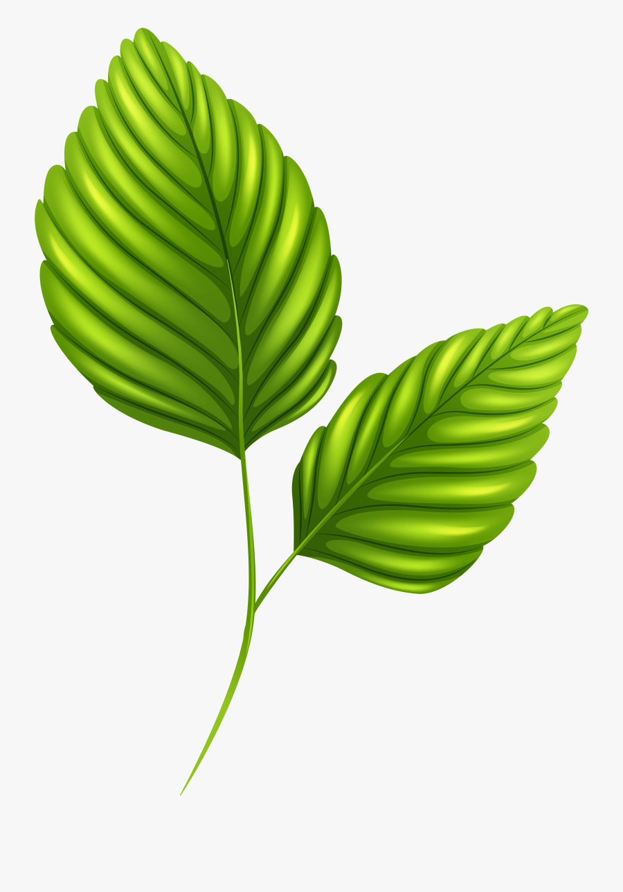 Two Green Leaves Png Clipart Image - Two Green Leaves Clipart, Transparent Clipart