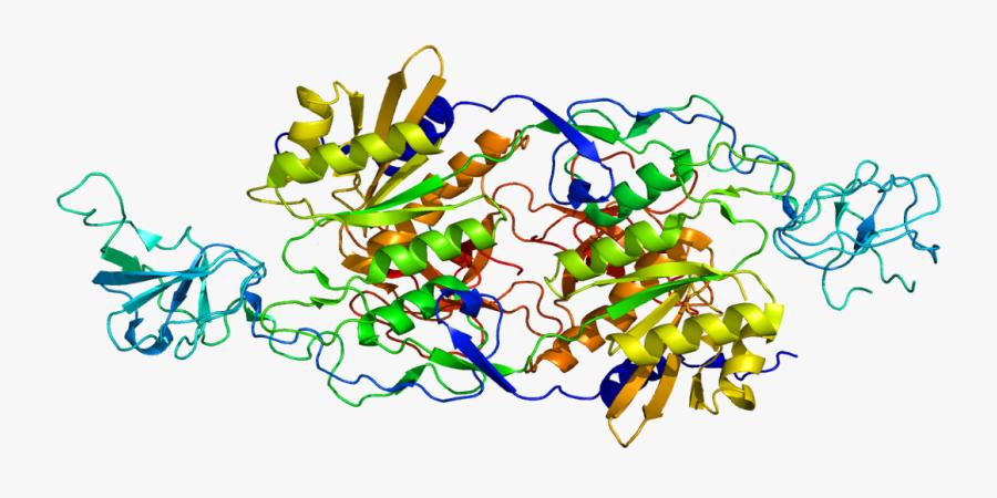 Protein Glrb Pdb 1t3e - Bapu Bommalu Of Vamana, Transparent Clipart