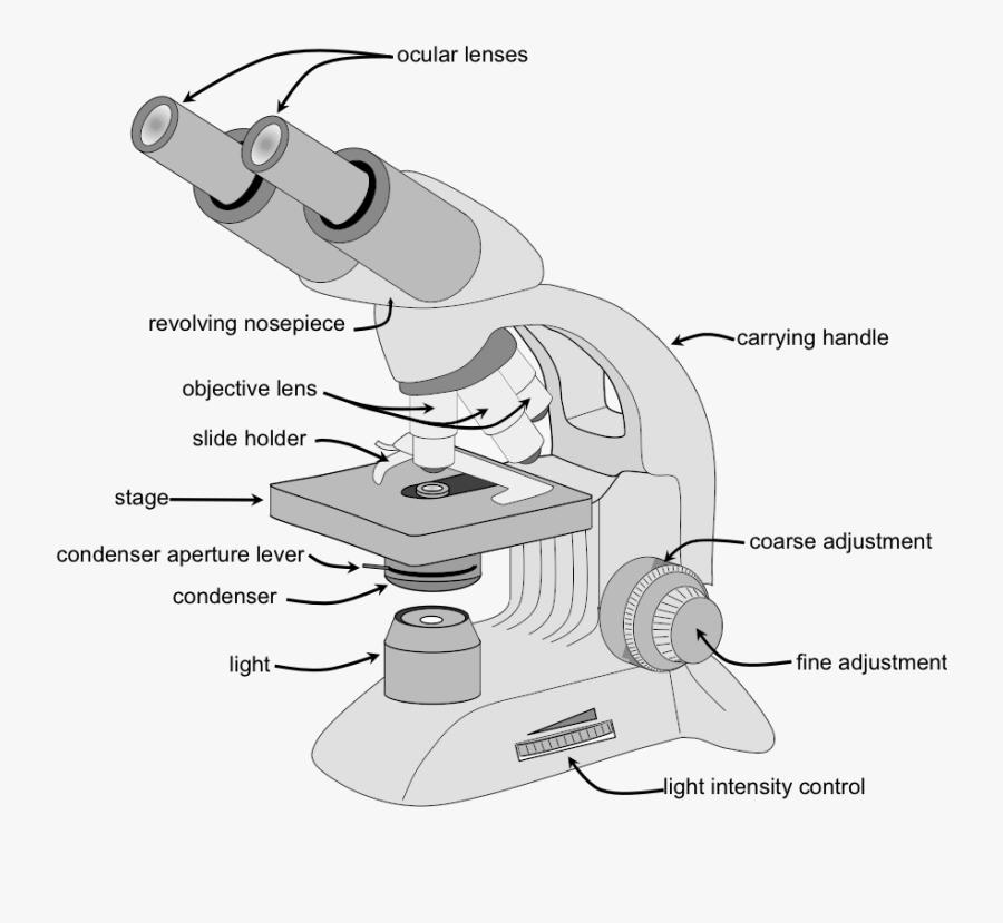 Clip Art Labeling A Microscope Compound Microscope Parts Free