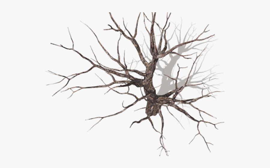 Dead Tree Top View, Transparent Clipart