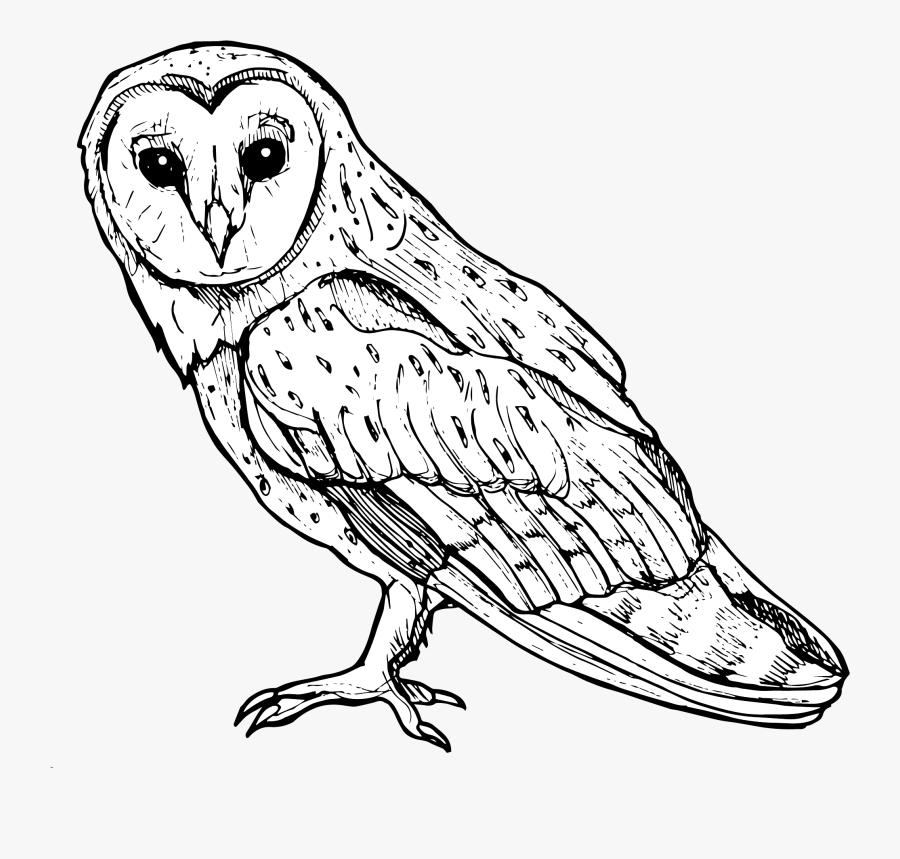Screech Owl, Transparent Clipart