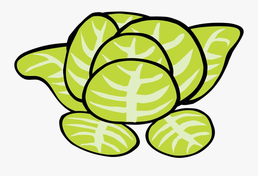 Lettuce Vegetable Food Free Picture - Lettuce Clip Art, Transparent Clipart