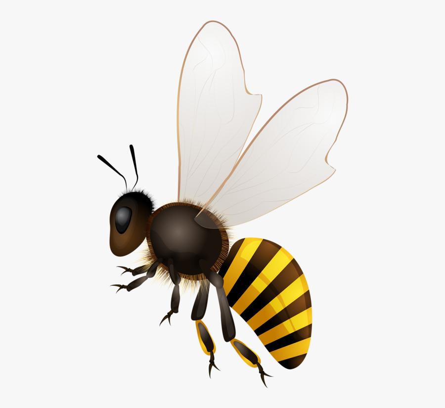 Clip Download Abeilles Abeja Abelha Png Bees Pinterest - Bees Png, Transparent Clipart